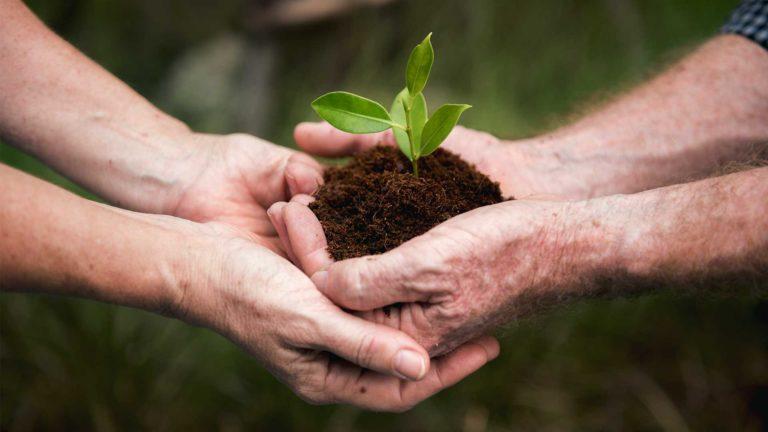 Nachhaltigkeit - Zwei Menschen halten mit beiden Händen eine Pflanze in einem Haufen Erde